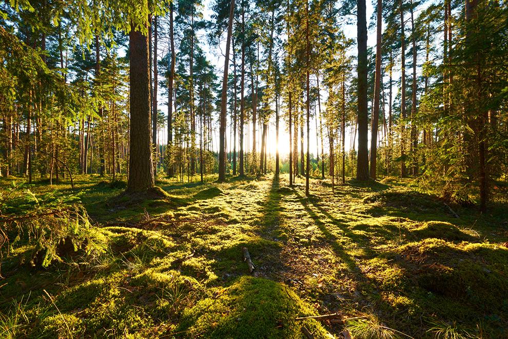 Los árboles como garantía de sostenibilidad y vida